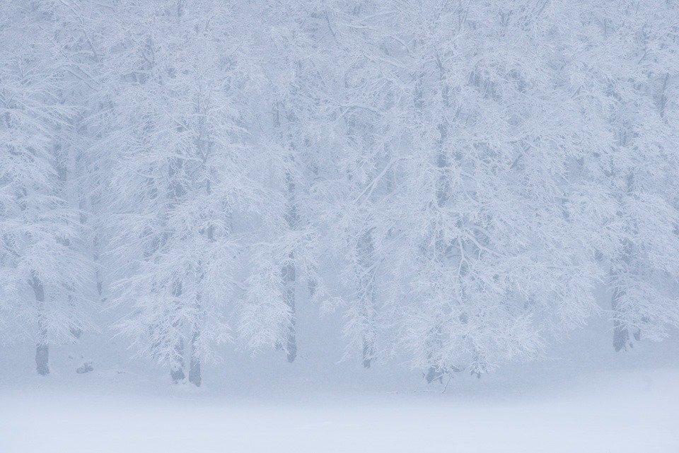 L'inverno scende sui boschi del Parco Nazionale d'Abruzzo, Lazio e Molise