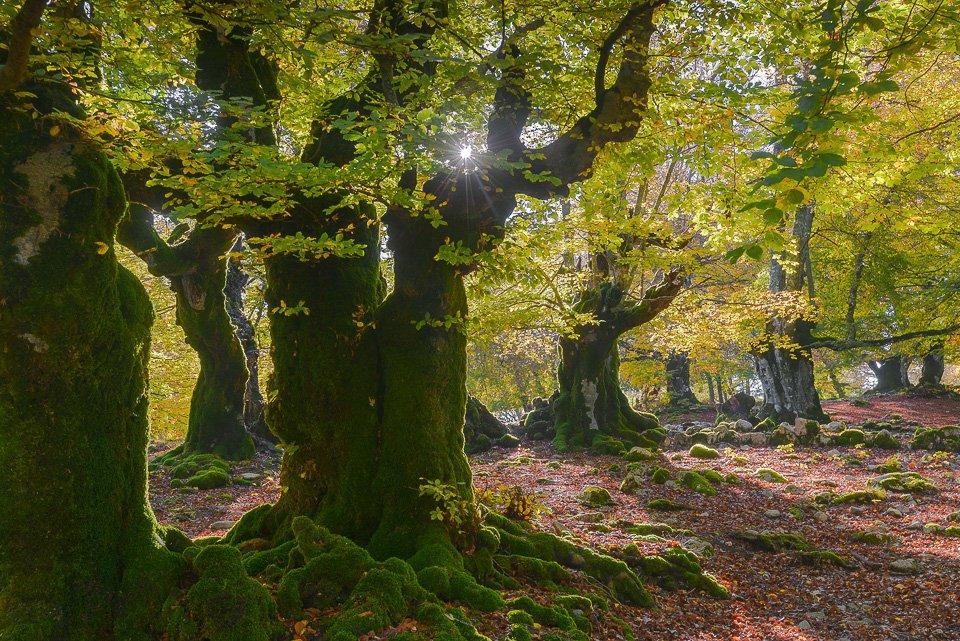 I colori dell'Autunno esplodono nei boschi del Parco Nazionale d'Abruzzo