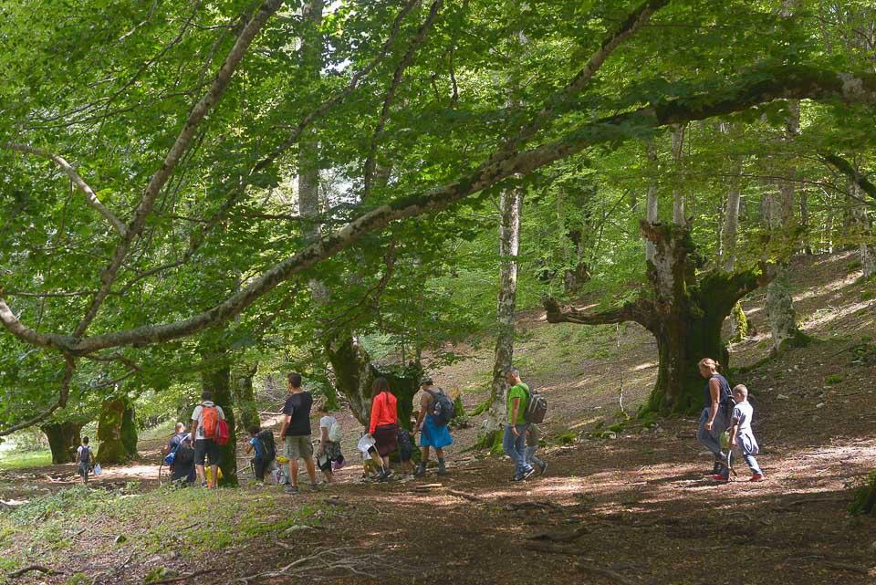Una passeggiata per le famiglie nei boschi della Difesa di Pescasseroli